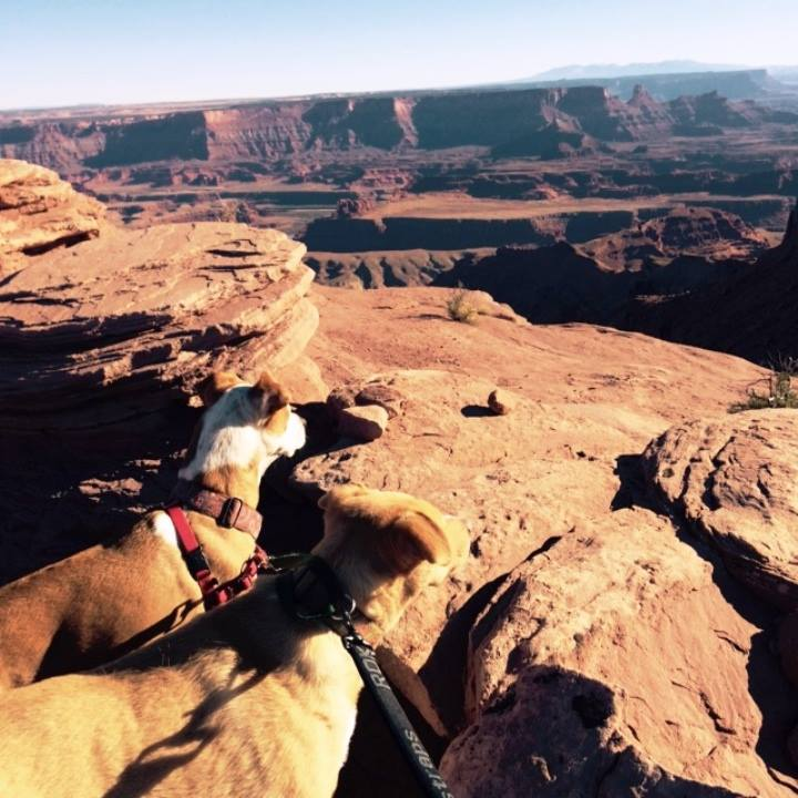 Dogs at Dead Horse Point
